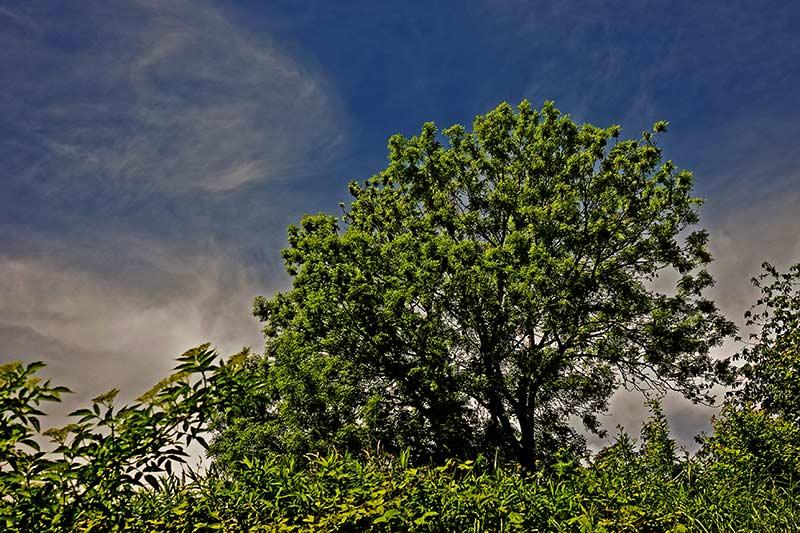 Baum der Hoffung © Otmar Brettschneider